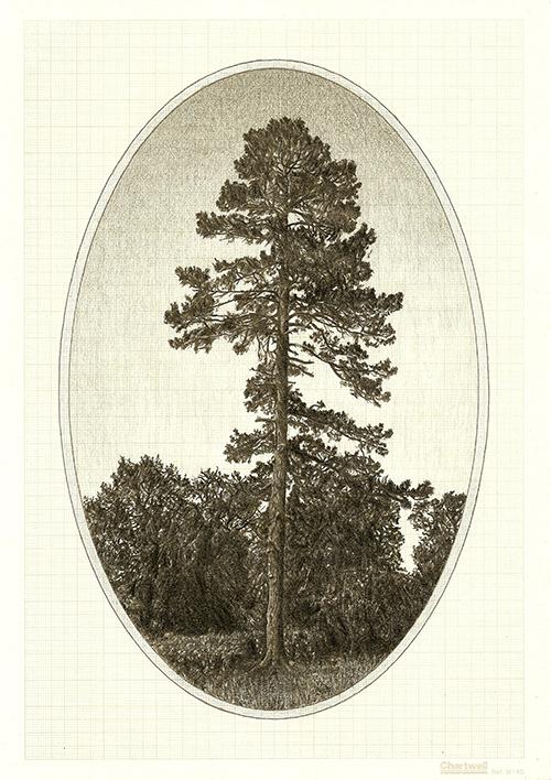 Family Tree I, graphite on graph paper, 29.7 x 21cm, 2012