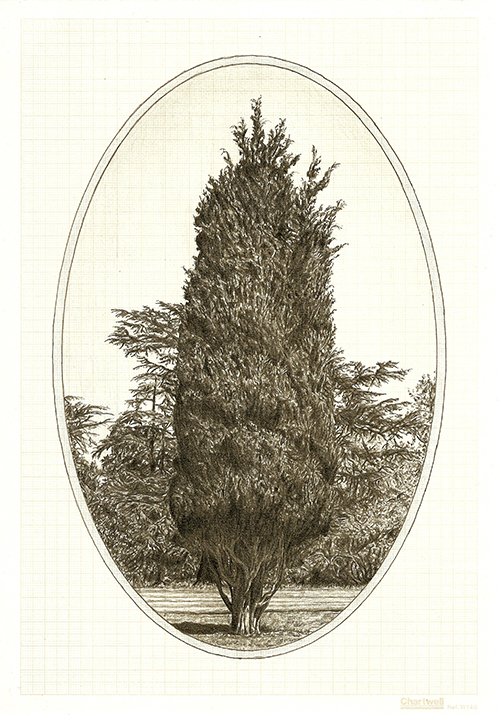 Family Tree II, graphite on graph paper, 29.7 x 21cm, 2012