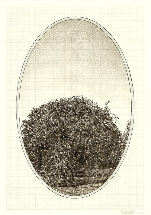 Family Tree III, graphite on graph paper, 29.7 x 21cm, 2013