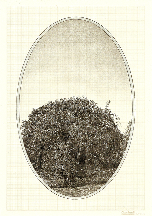 Family Tree III, graphite on graph paper, 29.7 x 21cm, 2013