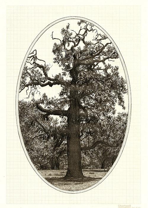 Family Tree IV, graphite on graph paper, 29.7 x 21cm, 2013