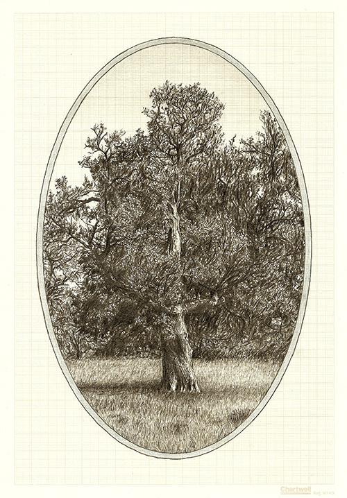 Family Tree IX, graphite on graph paper, 29.7 x 21cm, 2013