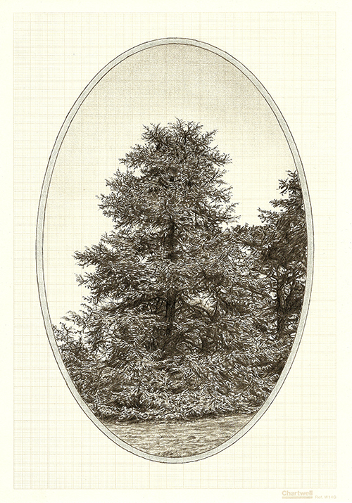 Family Tree V, graphite on graph paper, 29.7 x 21cm, 2013