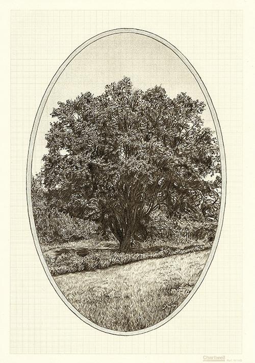 Family Tree VI, graphite on graph paper, 29.7 x 21cm, 2013