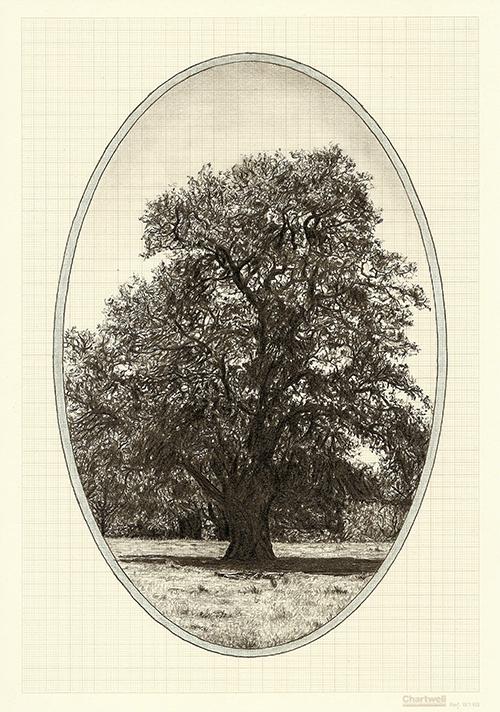 Family Tree VIII, graphite on graph paper, 29.7 x 21cm, 2013