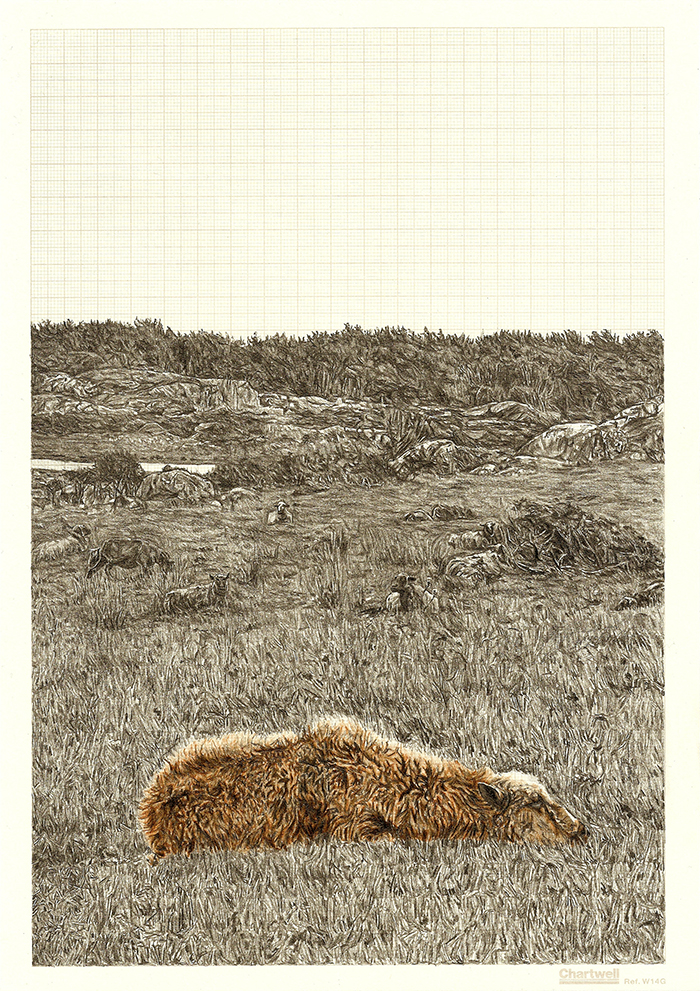 Sheep-Dip, graphite and coloured pencil on graph paper, 29.7cm x 21cm, 2012
