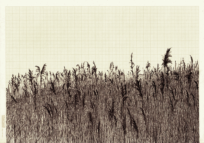 Vox Populi or Untitled Reeds, graphite on graph paper, 21cm x 29.7cm, 2013