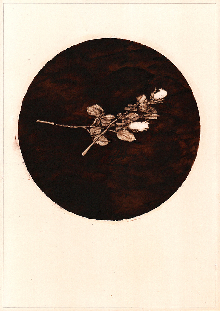 A matter of England (3), graphite, pyrography and ink on tea stained paper, 35cm x 25cm, 2020